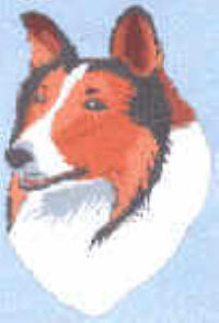Counted Cross Stitch Kits - Collie by Dianne